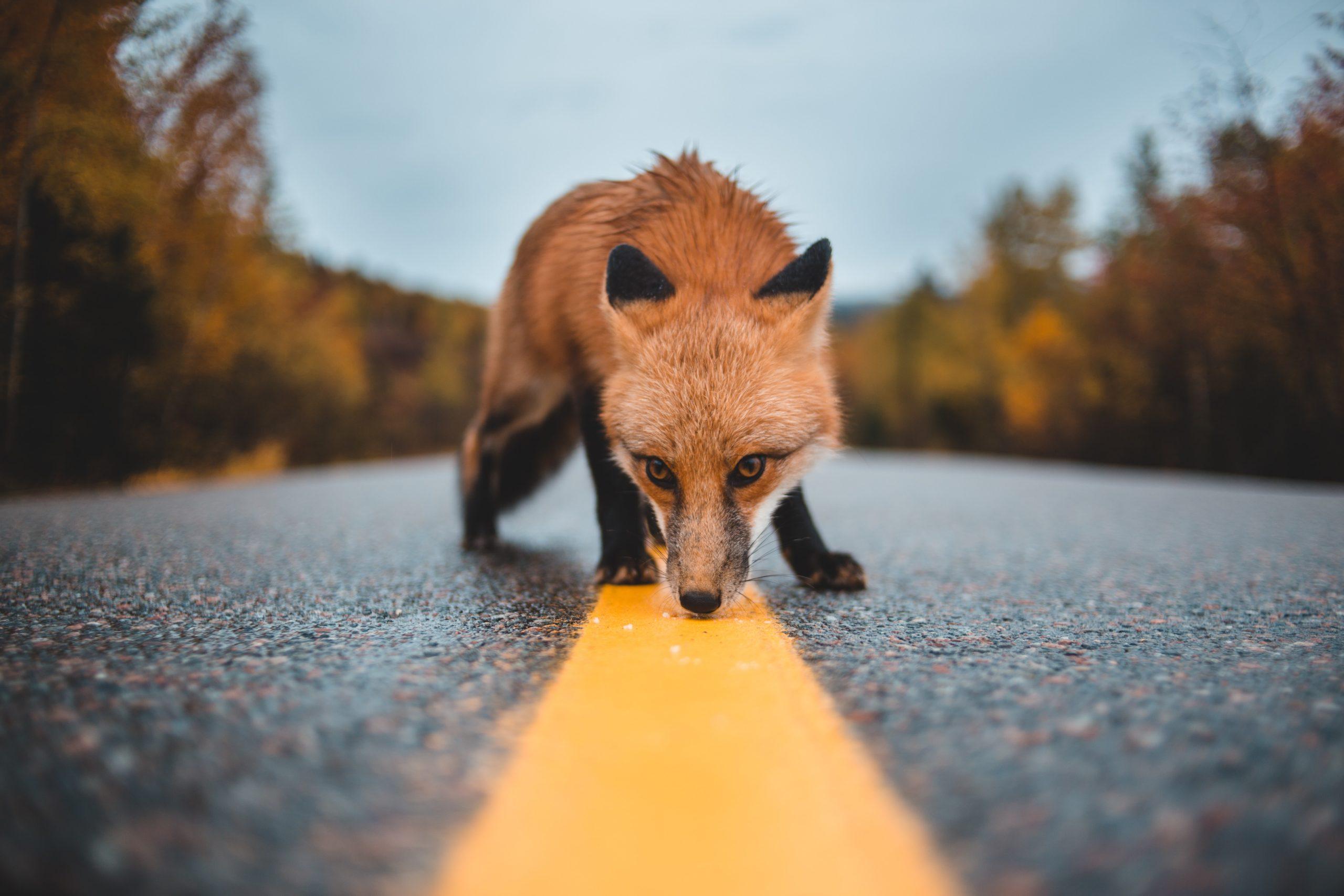 """Evolution in der Stadt – """"Die Präsenz von Wildtieren ist eine Art Geschenk"""""""
